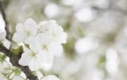 柔焦摄影 浪漫朦胧花卉图片 柔焦摄影朦胧浪漫花卉摄影 花卉壁纸