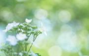 柔焦镜头拍摄的鲜花图片 柔焦摄影朦胧浪漫花卉摄影 花卉壁纸