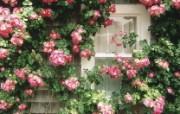 生命的绽放 植物花卉壁纸精选 第一辑 Country Cottage Nantucket Massachusetts 开满鲜花的窗户图片壁纸 生命的绽放植物花卉壁纸精选 第一辑 花卉壁纸