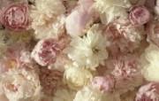 生命的绽放 植物花卉壁纸精选 第一辑 A Fragrant Arrangement 康乃馨图片壁纸 生命的绽放植物花卉壁纸精选 第一辑 花卉壁纸