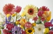 生命的绽放 植物花卉壁纸精选 第一辑 Springtime Arrangement 插花图片壁纸 生命的绽放植物花卉壁纸精选 第一辑 花卉壁纸