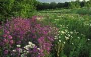 生命的绽放 植物花卉壁纸精选 第一辑 Summer Wildflowers Kentucky 夏季野花图片壁纸 生命的绽放植物花卉壁纸精选 第一辑 花卉壁纸