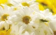 鲜花装饰 1 18 鲜花装饰 花卉壁纸
