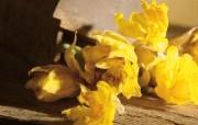 鲜花装饰 1 16 鲜花装饰 花卉壁纸