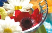 鲜花装饰 1 13 鲜花装饰 花卉壁纸