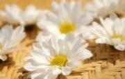 鲜花装饰 1 10 鲜花装饰 花卉壁纸