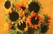 鲜花装饰 1 9 鲜花装饰 花卉壁纸