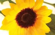 鲜花装饰 1 8 鲜花装饰 花卉壁纸