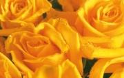 鲜花装饰 1 7 鲜花装饰 花卉壁纸