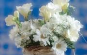 鲜花装饰 1 5 鲜花装饰 花卉壁纸