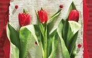 鲜花装饰 1 1 鲜花装饰 花卉壁纸