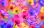 彩色花卉CG插画壁纸 数码合成花卉插画 花卉壁纸