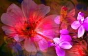 艳丽花卉合成壁纸 数码合成花卉插画 花卉壁纸