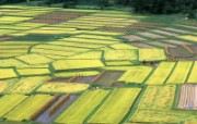 田野麦浪 4 11 田野麦浪 花卉壁纸
