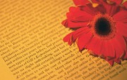 微距下的花香 花卉壁纸