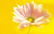 微距花卉图片壁纸 Desktop Wallpaper of micro focus Flowers 微距下的花香 花卉壁纸