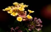 精美微距花卉桌面壁纸 微距下的植物花卉摄影 花卉壁纸