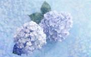 绣球花图片 布艺花卉装饰图片 温馨布艺仿真花卉壁纸 花卉壁纸