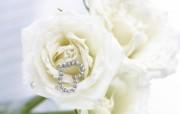 白玫瑰 布艺花卉装饰图片 温馨布艺仿真花卉壁纸 花卉壁纸