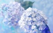 精致布艺仿真花图片 1920 1200 温馨布艺仿真花卉壁纸 花卉壁纸