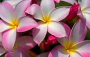 鲜花合集 4 16 鲜花合集 花卉壁纸