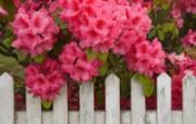 鲜花合集 4 8 鲜花合集 花卉壁纸