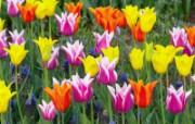 鲜花合集 4 7 鲜花合集 花卉壁纸
