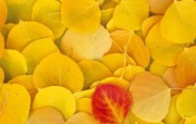 鲜花合集 4 4 鲜花合集 花卉壁纸
