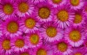 鲜花合集 7 20 鲜花合集 花卉壁纸
