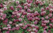 鲜花合集 7 17 鲜花合集 花卉壁纸
