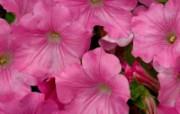 鲜花合集 7 16 鲜花合集 花卉壁纸