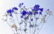 鲜花特写 18 9 鲜花特写 花卉壁纸