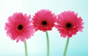 鲜花特写 18 6 鲜花特写 花卉壁纸