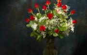 鲜花特写 11 8 鲜花特写 花卉壁纸