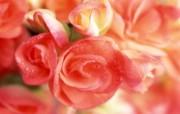 鲜花特写 14 7 鲜花特写 花卉壁纸