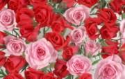 鲜花特写 15 6 鲜花特写 花卉壁纸