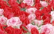 鲜花特写 15 5 鲜花特写 花卉壁纸