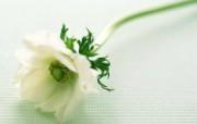 鲜花特写 17 5 鲜花特写 花卉壁纸
