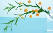 鲜花特写 17 3 鲜花特写 花卉壁纸