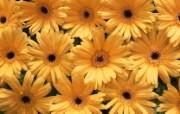 鲜花特写 14 3 鲜花特写 花卉壁纸