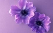 鲜花特写 15 1 鲜花特写 花卉壁纸