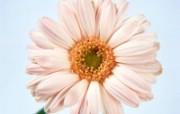 鲜花特写 8 7 鲜花特写 花卉壁纸