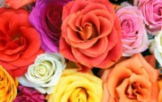 鲜花特写 4 2 鲜花特写 花卉壁纸