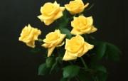 鲜花特写 12 16 鲜花特写 花卉壁纸