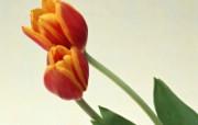 鲜花特写 12 6 鲜花特写 花卉壁纸