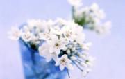 鲜花特写 20 14 鲜花特写 花卉壁纸