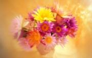 鲜花特写 10 16 鲜花特写 花卉壁纸