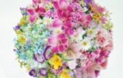 鲜花特写 10 15 鲜花特写 花卉壁纸