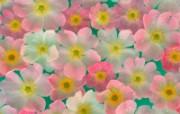 鲜花特写 10 12 鲜花特写 花卉壁纸