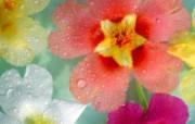 鲜花特写 10 11 鲜花特写 花卉壁纸